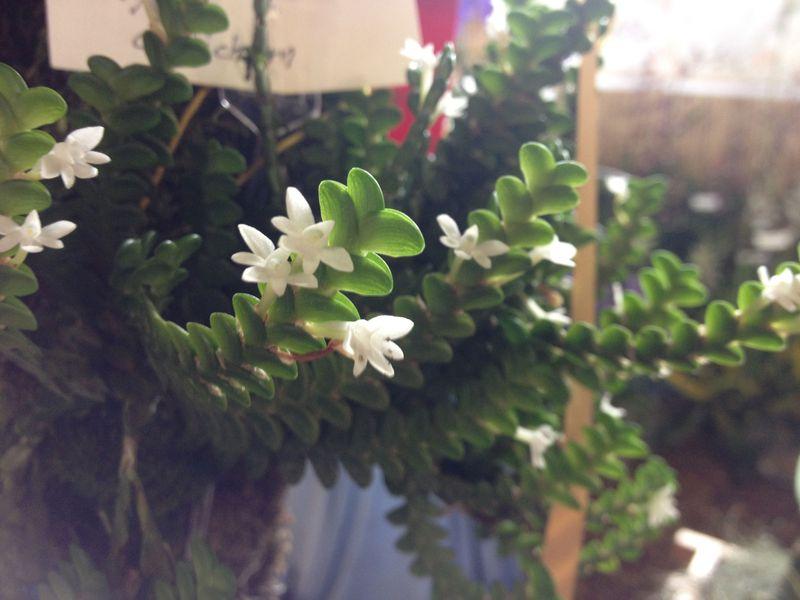 Awardwinningorchid